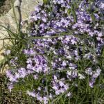 """Summer flowers"" by RobertKovacs"