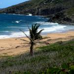 """""""St. Kitts"""" by iggyfan"""