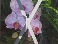 Toves Orchids in Window