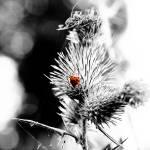 """""""Flower 01"""" by jocopix"""
