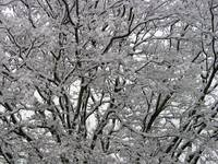 Garland Snow Branch
