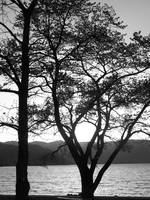 Black and White Trees and Lake