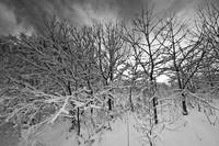 Winter_Time_2_BW