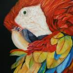 """Scarlet Macaw"" by artistamy"