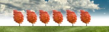 Red_Trees_Row_F