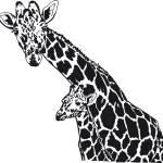 """""""Giraffes"""" by Carissa_Hersum"""