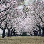 """""""nacimiento de la primavera"""" by mazintosh"""