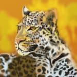 """leopard"" by DavidBleakley"