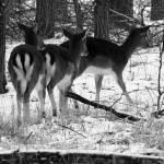 """""""Three Deers"""" by fejesb"""