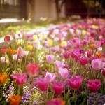 """""""vintage spring"""" by danielvineyard"""