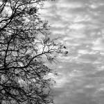 """""""Imagekind"""" by jodeswarte"""