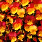 """Bright Violas"" by Sari_McNamee"
