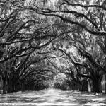 """""""Sunny Southern Day - Black and White"""" by Groecar"""