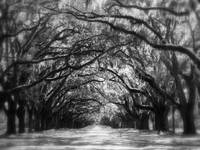 Dreams of the Old South