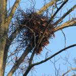 """The Squirrels Nest IMG_2751"" by LindieRacz"