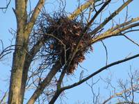 The Squirrels Nest IMG_2751