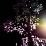 """""""Tree"""" by dybowski"""