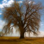 """Tree"" by skmiller"