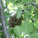 """Honey Bee Pre-Nest Hive"" by legion150"