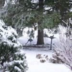 """A Crane Bird in the winter"" by legion150"