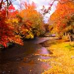 """Fall Creek"" by Art_by_Debrosi"