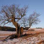 """Bradgate Park in Winter"" by AndyStafford"