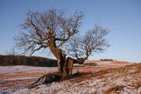 Bradgate Park in Winter