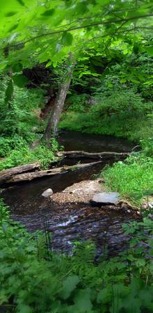 Meandering Forest Stream