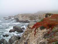 Bodega Bay in the Fog
