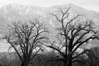 Two Tree - Flatirons - Boulder County