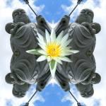 """""""Jizo Lotus"""" by DavidWerk"""
