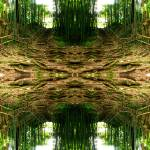"""Bamboo Forest"" by DavidWerk"