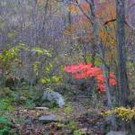"""Autumn Forest 256"" by photographybydonna"