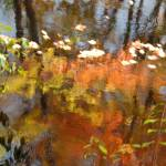 """Autumn Impressionism"" by bobtravis"