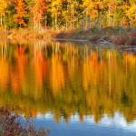 """Fall colors at Holt Pond"" by bobtravis"