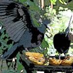 """""""birdpark iii"""" by AGAZ"""