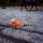 """Iguana and the Paso Fino Stallion"" by gparts"