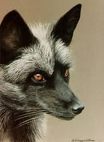 Silver Fox     painting