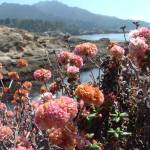"""Point Lobos with Flowers"" by Justusportraits"
