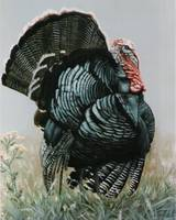 Tom Turkey painting