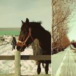 """Winter horses"" by louisefahy"