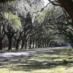 """""""Green Lane with Live Oaks"""" by Groecar"""