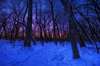 Twilight in the frozen forest