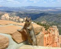 Bryce Canyon Tour Guide