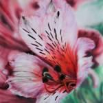 """""""Peruvian Lily"""" by MichaelTBurt"""