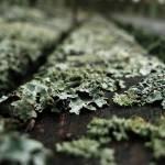 """Lichen"" by DariaKropotova"