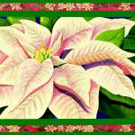 """Pink & Cream Poinsettia"" by janlan44"