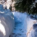 """Trail Through Snow"" by MichaelKarasik"