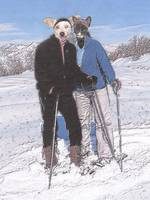 Snowshoeing Cat and Dog