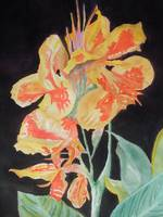 Orange And Yellow Canna Lily on Black